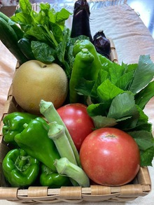 採り立て夏野菜で晩ご飯